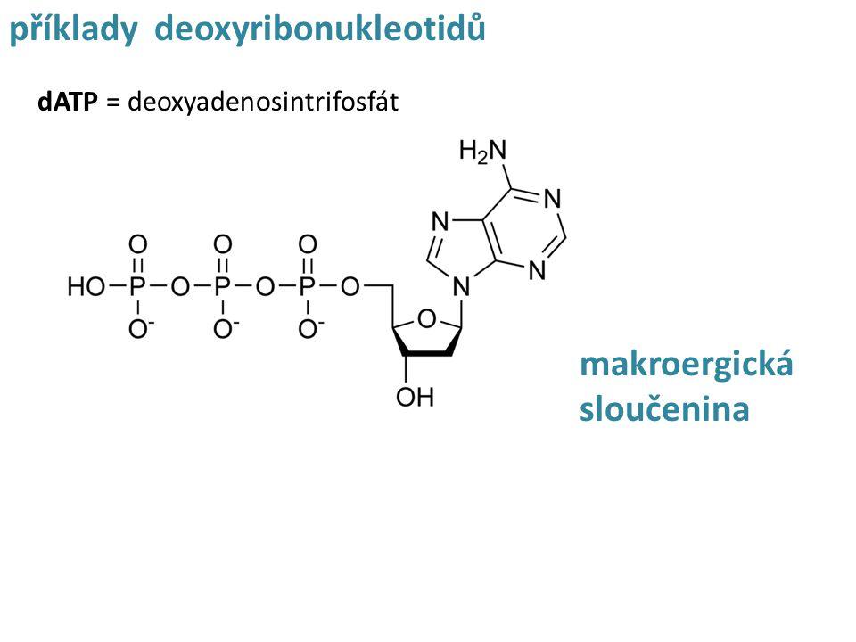 dATP = deoxyadenosintrifosfát příklady deoxyribonukleotidů makroergická sloučenina