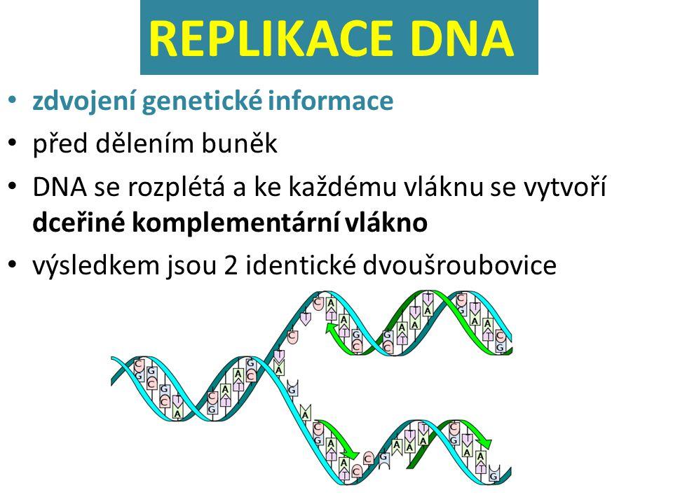 zdvojení genetické informace před dělením buněk DNA se rozplétá a ke každému vláknu se vytvoří dceřiné komplementární vlákno výsledkem jsou 2 identick