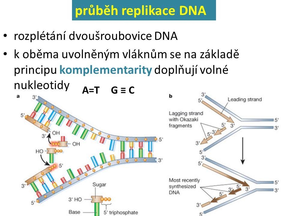 rozplétání dvoušroubovice DNA k oběma uvolněným vláknům se na základě principu komplementarity doplňují volné nukleotidy průběh replikace DNA A=TG ≡ C