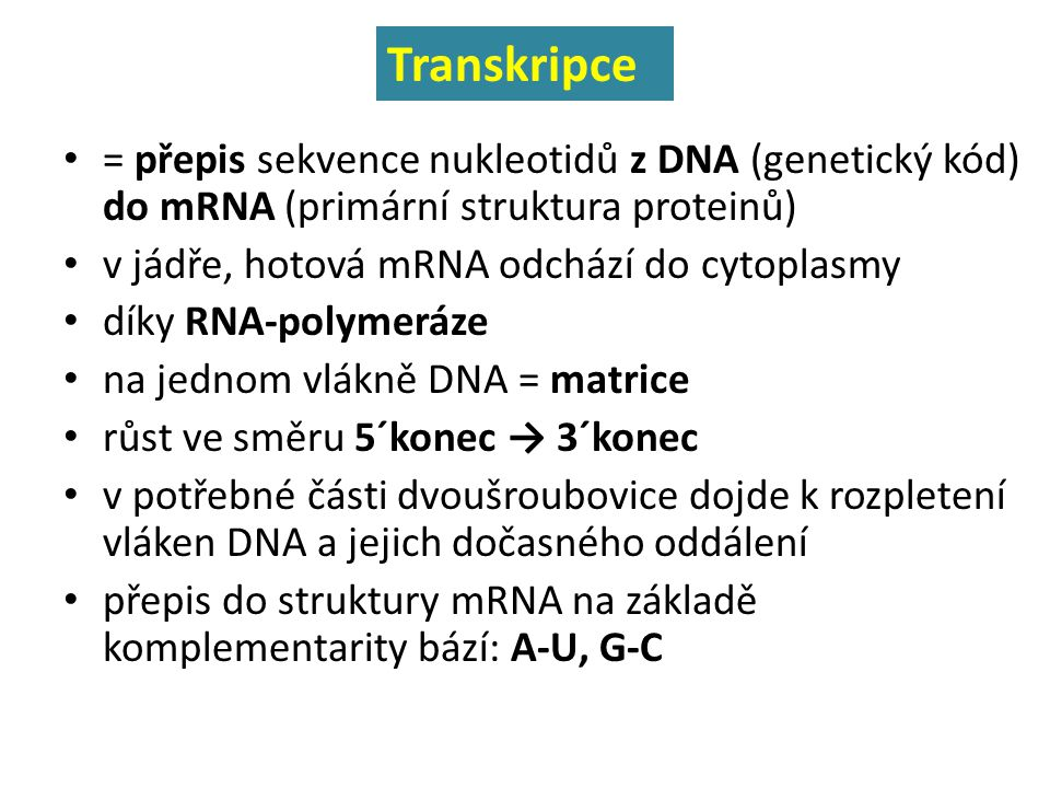 = přepis sekvence nukleotidů z DNA (genetický kód) do mRNA (primární struktura proteinů) v jádře, hotová mRNA odchází do cytoplasmy díky RNA-polymeráz