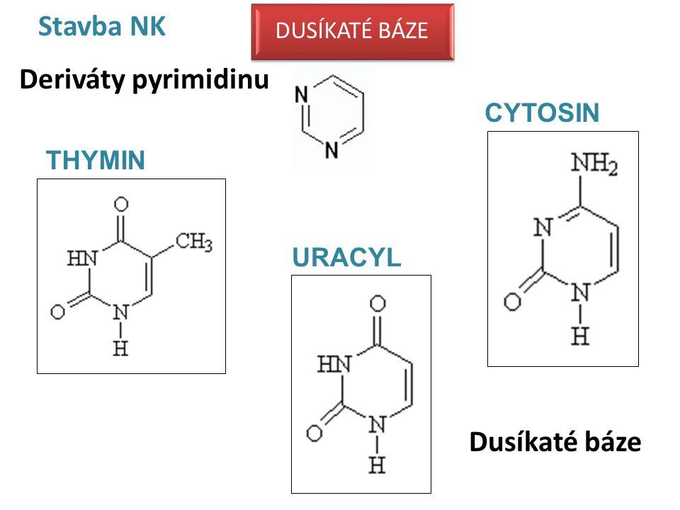 Stavba NK Dusíkaté báze Deriváty pyrimidinu URACYL THYMIN CYTOSIN DUSÍKATÉ BÁZE