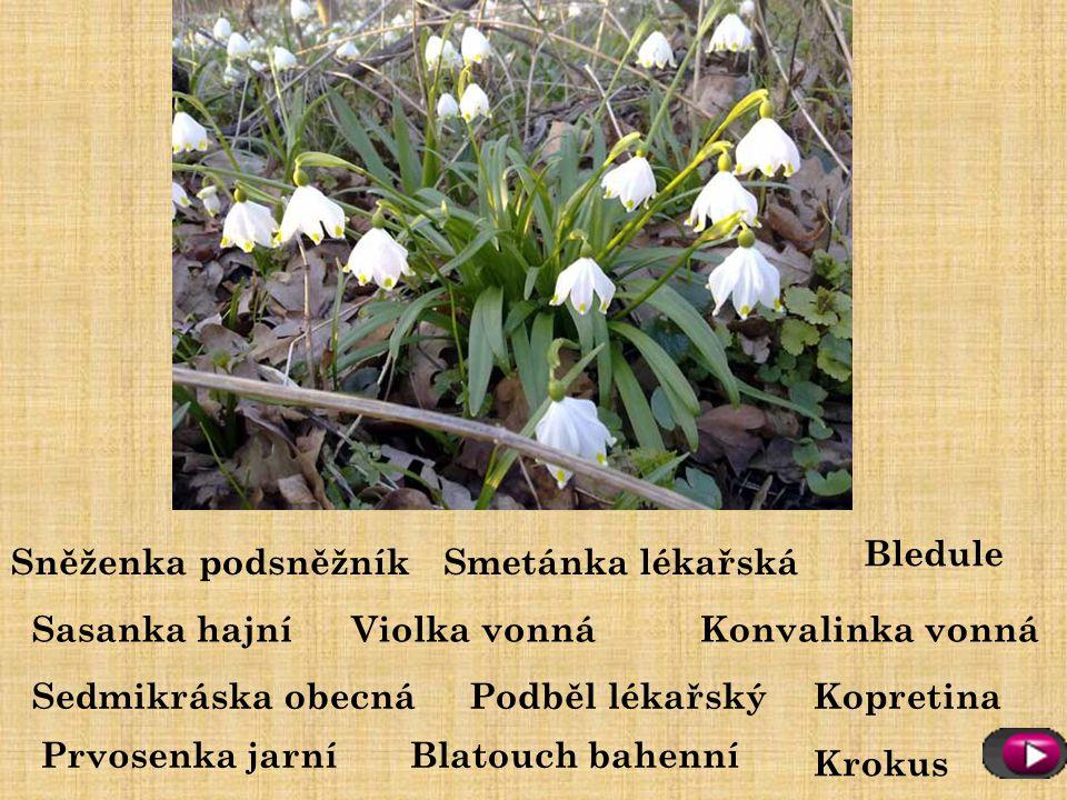 Poznáš jarní rostliny?