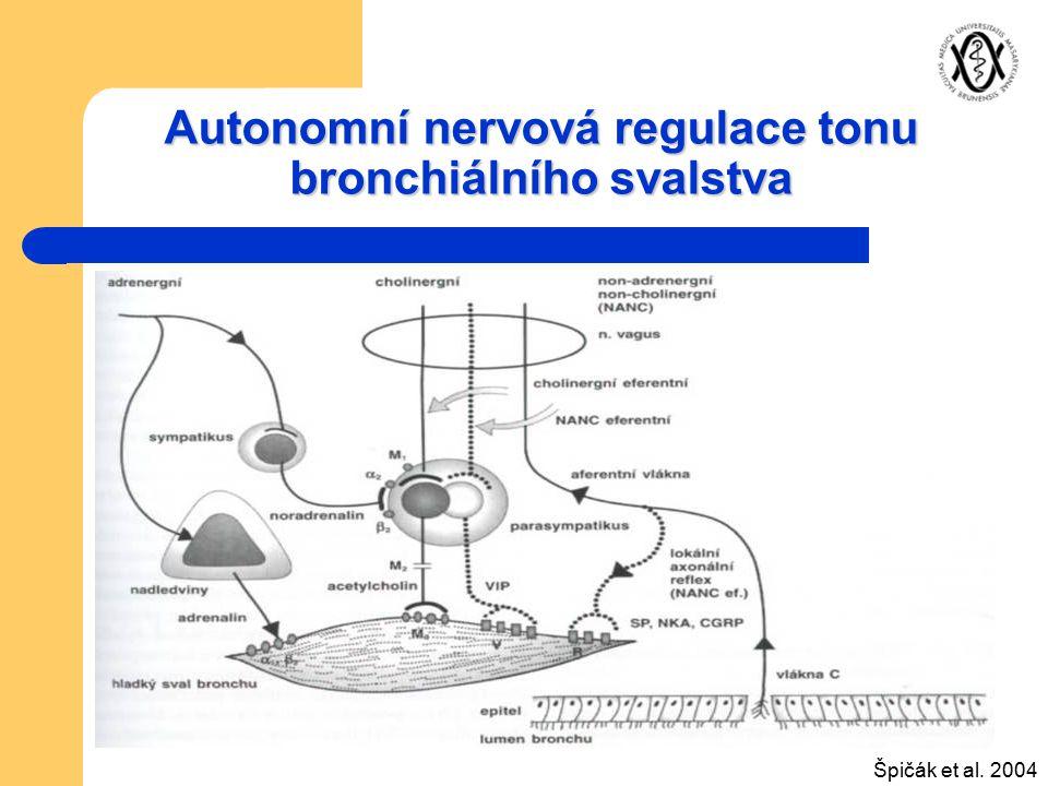 Autonomní nervová regulace tonu bronchiálního svalstva Špičák et al. 2004