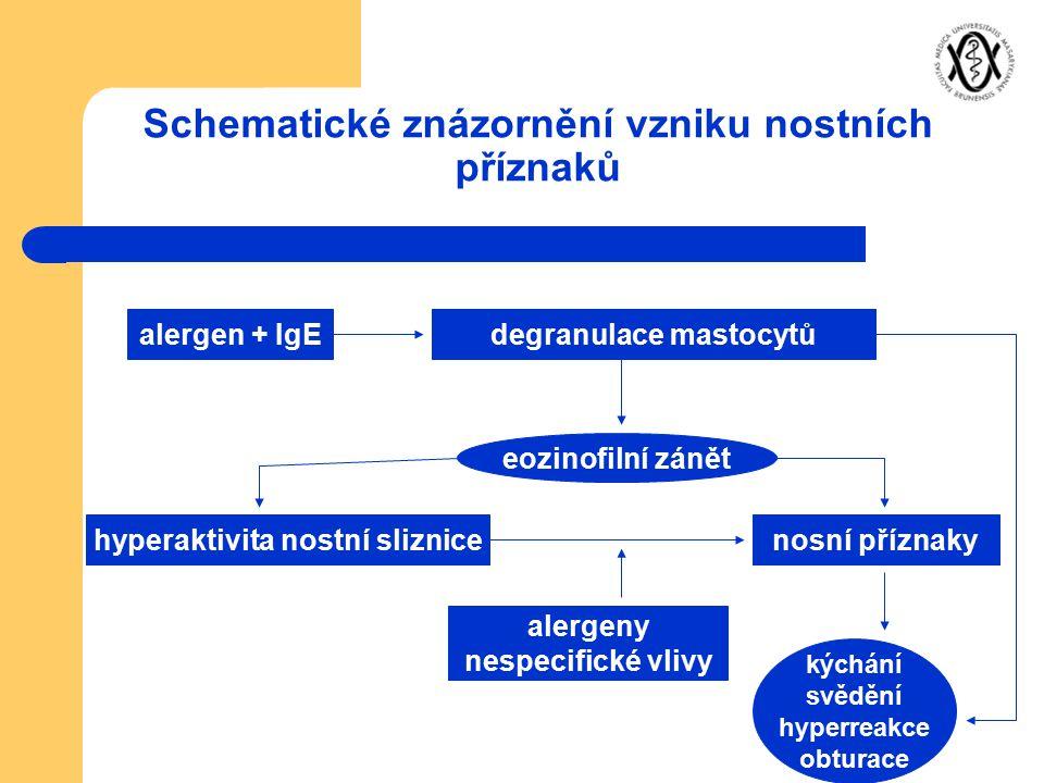 Schematické znázornění vzniku nostních příznaků alergen + IgEdegranulace mastocytů eozinofilní zánět hyperaktivita nostní sliznicenosní příznaky alerg