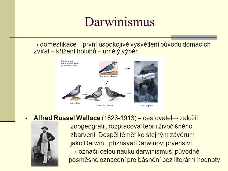 Darwinismus → domestikace – první uspokojivé vysvětlení původu domácích zvířat – křížení holubů – umělý výběr Alfred Russel Wallace (1823-1913) – cest