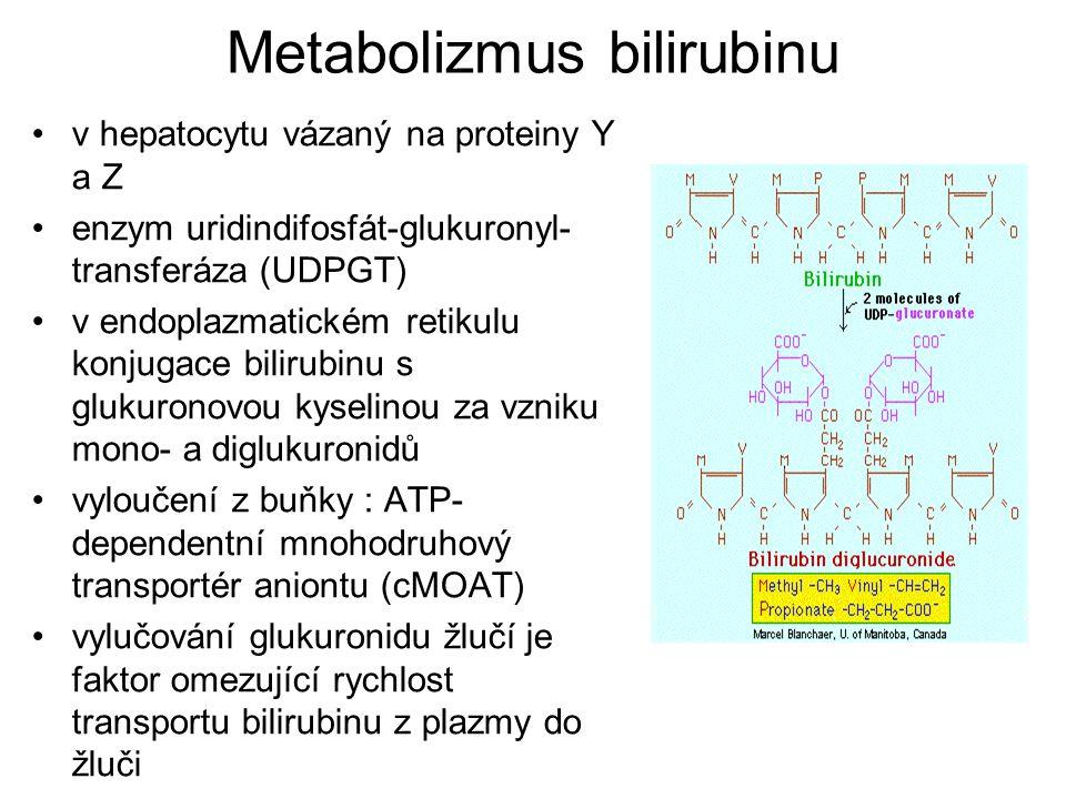 Metabolizmus bilirubinu žlučovými cestami se bilirubin dostává do střeva - dekonjugace a zpětná resorpce – enterohepatální oběh - vyloučení stolicí - přeměna střevními bakteriemi na bezbarvý urobilinogen – část se vstřebá a je vyloučena močí, zbytek se mění na sterkobilinogen a oxiduje na hnědý sterkobilin (zbarvení stolice)
