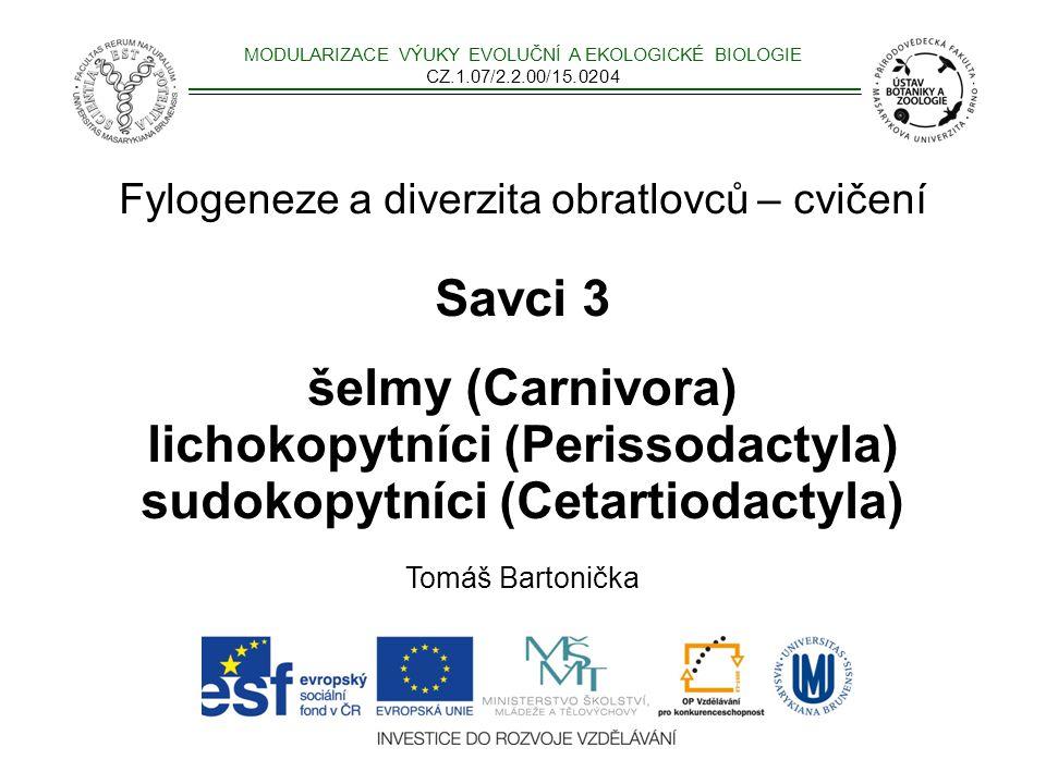 Fylogeneze a diverzita obratlovců – cvičení Savci 3 šelmy (Carnivora) lichokopytníci (Perissodactyla) sudokopytníci (Cetartiodactyla) Tomáš Bartonička