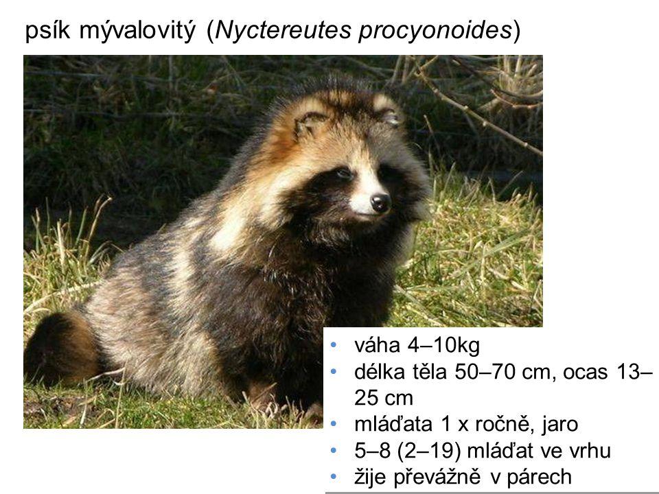 psík mývalovitý (Nyctereutes procyonoides) váha 4–10kg délka těla 50–70 cm, ocas 13– 25 cm mláďata 1 x ročně, jaro 5–8 (2–19) mláďat ve vrhu žije přev
