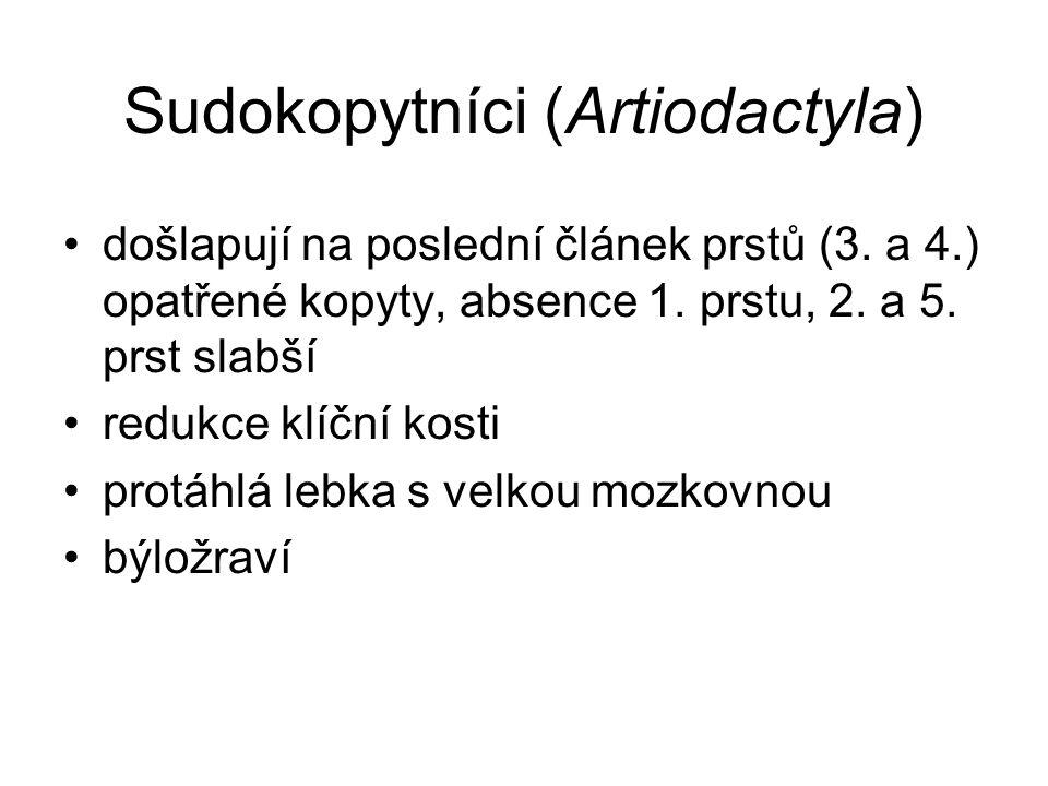 Sudokopytníci (Artiodactyla) došlapují na poslední článek prstů (3. a 4.) opatřené kopyty, absence 1. prstu, 2. a 5. prst slabší redukce klíční kosti