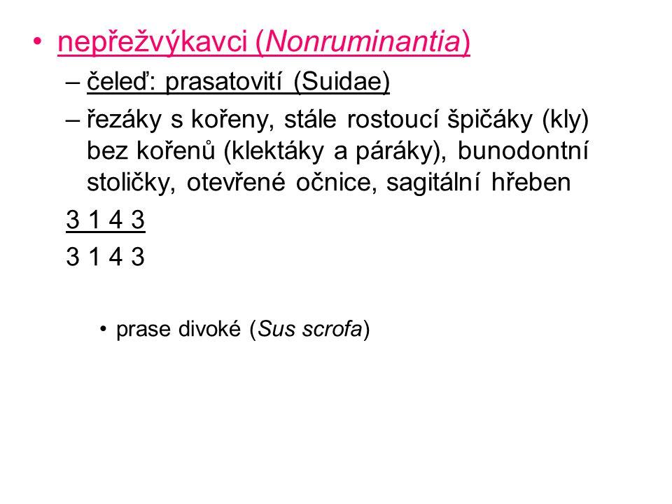 nepřežvýkavci (Nonruminantia) –čeleď: prasatovití (Suidae) –řezáky s kořeny, stále rostoucí špičáky (kly) bez kořenů (klektáky a páráky), bunodontní s