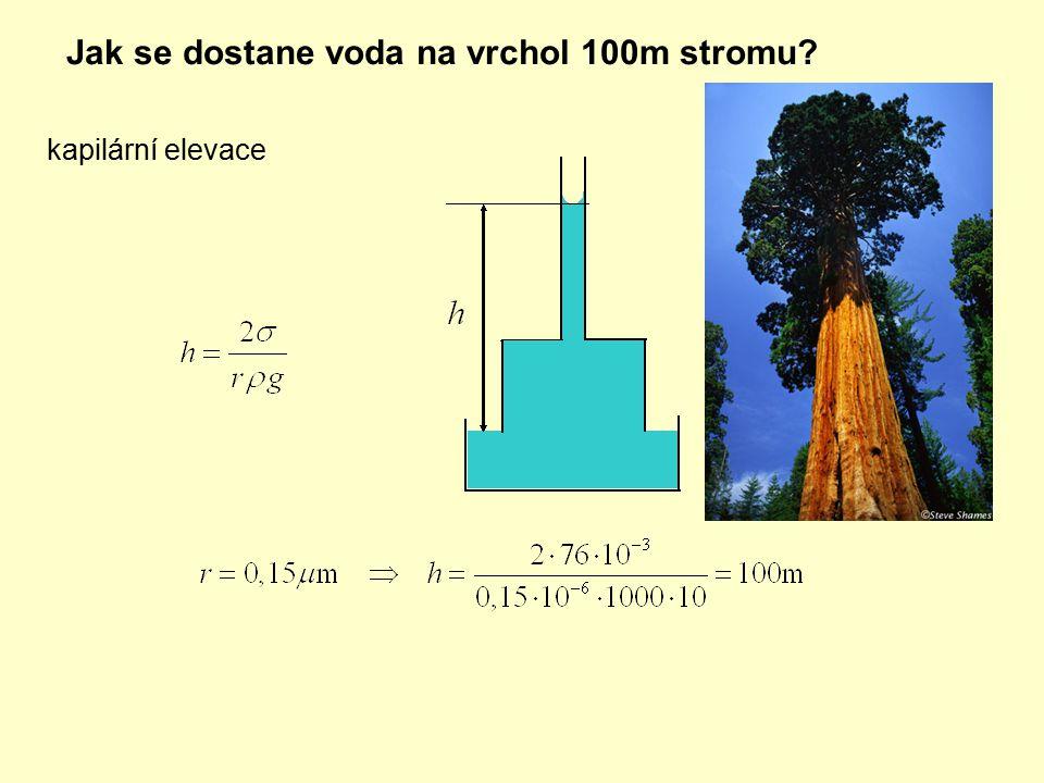 Jak se dostane voda na vrchol 100m stromu? kapilární elevace