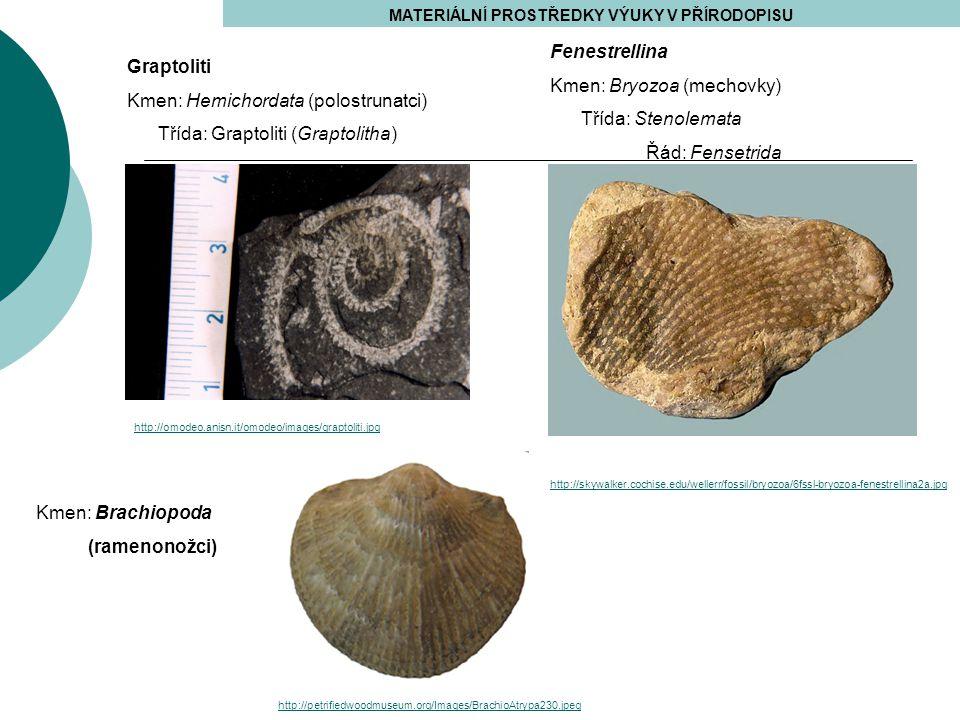MATERIÁLNÍ PROSTŘEDKY VÝUKY V PŘÍRODOPISU http://skywalker.cochise.edu/wellerr/fossil/bryozoa/6fssl-bryozoa-fenestrellina2a.jpg http://omodeo.anisn.it