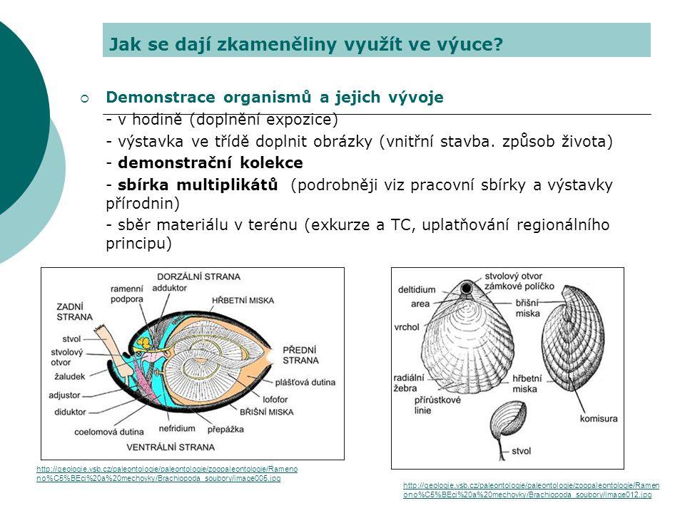 Jak se dají zkameněliny využít ve výuce?  Demonstrace organismů a jejich vývoje - v hodině (doplnění expozice) - výstavka ve třídě doplnit obrázky (v
