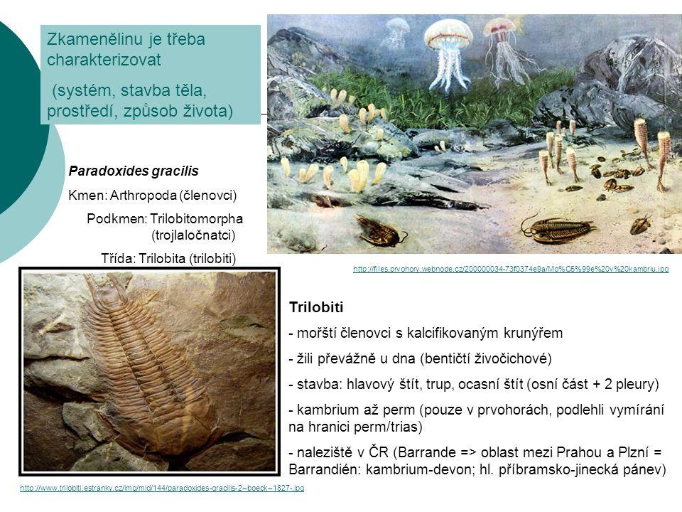http://www.trilobiti.estranky.cz/img/mid/144/paradoxides-gracilis-2--boeck--1827-.jpg http://files.prvohory.webnode.cz/200000034-73f0374e9a/Mo%C5%99e%