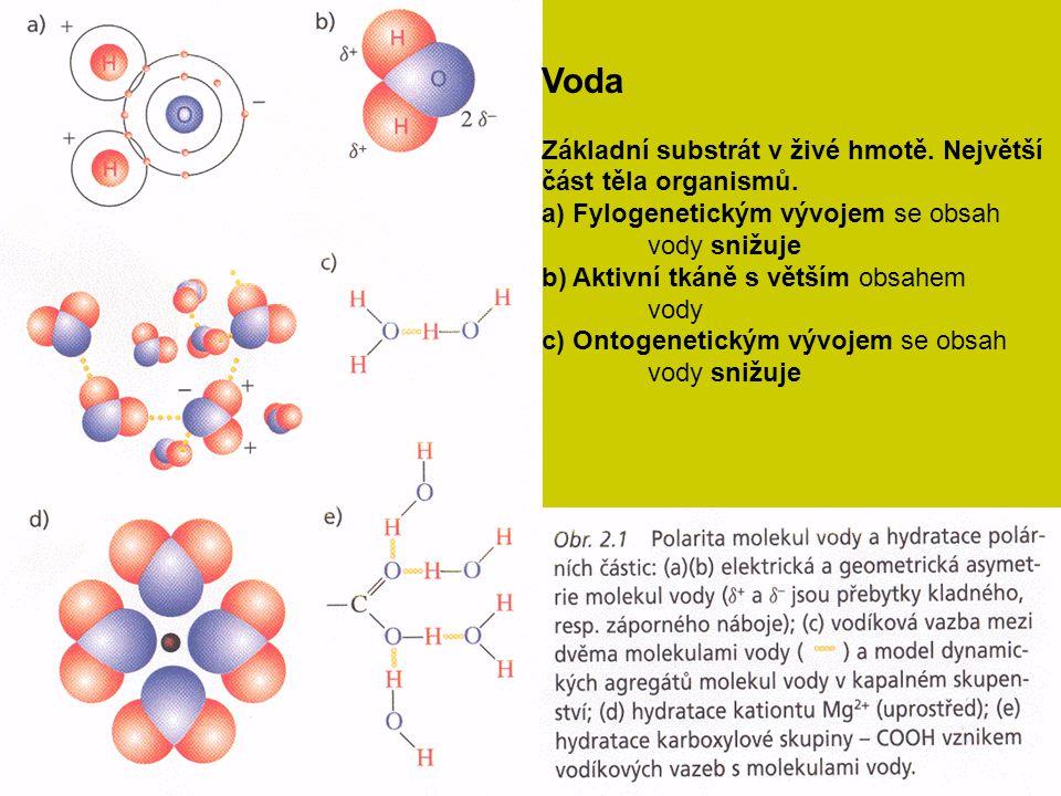 Voda Základní substrát v živé hmotě. Největší část těla organismů. a) Fylogenetickým vývojem se obsah vody snižuje b) Aktivní tkáně s větším obsahem v