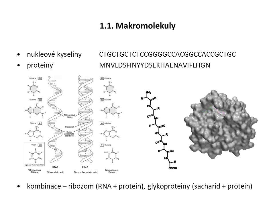 1.1. Makromolekuly nukleové kyselinyCTGCTGCTCTCCGGGGCCACGGCCACCGCTGC proteinyMNVLDSFINYYDSEKHAENAVIFLHGN kombinace – ribozom (RNA + protein), glykopro
