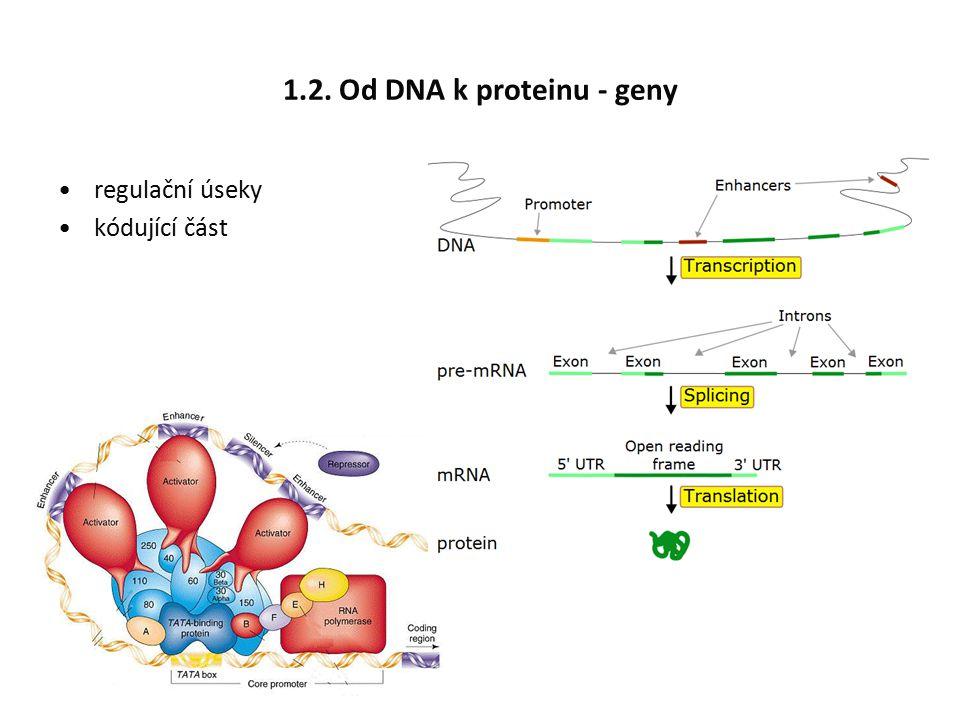 1.3. Protein se skládají z aminokyselin (AA)
