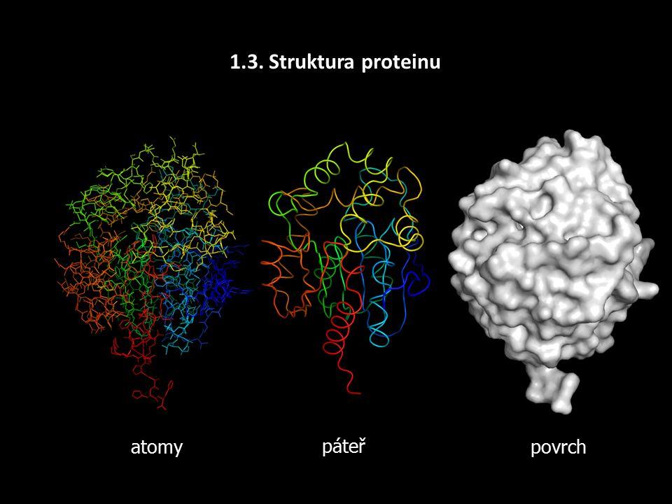 1.3. Úrovně struktury Primární - sekvenceSekundární KvarterníTerciární – topologie, souřadnice