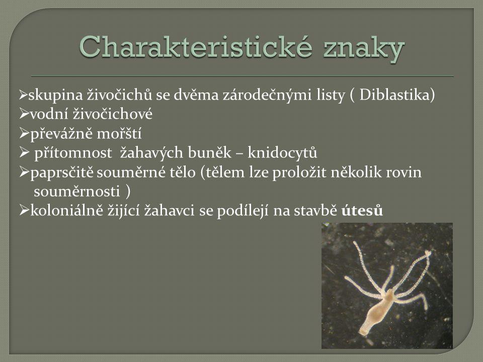 skupina živočichů se dvěma zárodečnými listy ( Diblastika)  vodní živočichové  převážně mořští  přítomnost žahavých buněk – knidocytů  paprsčitě souměrné tělo (tělem lze proložit několik rovin souměrnosti )  koloniálně žijící žahavci se podílejí na stavbě útesů