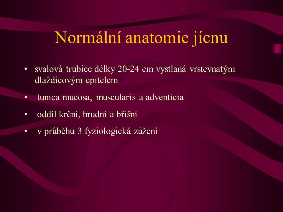 Normální anatomie jícnu svalová trubice délky 20-24 cm vystlaná vrstevnatým dlaždicovým epitelem tunica mucosa, muscularis a adventicia oddíl krční, h