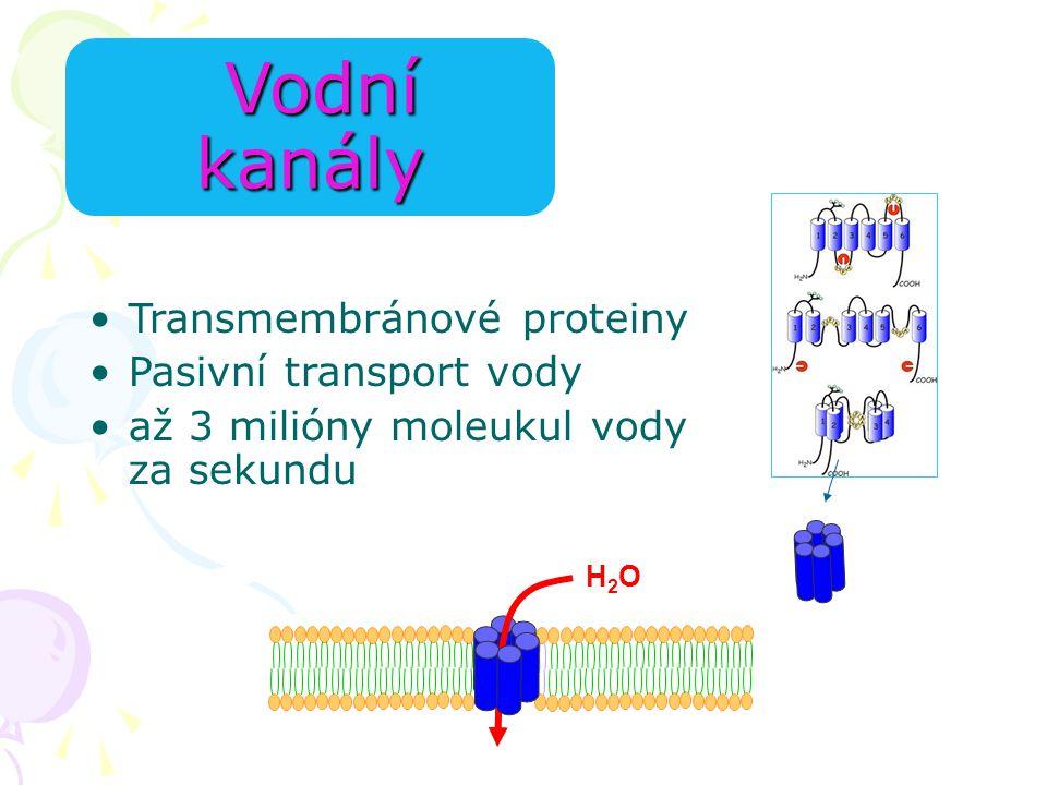 H2OH2O Vodní kanály Vodní kanály Transmembránové proteiny Pasivní transport vody až 3 milióny moleukul vody za sekundu