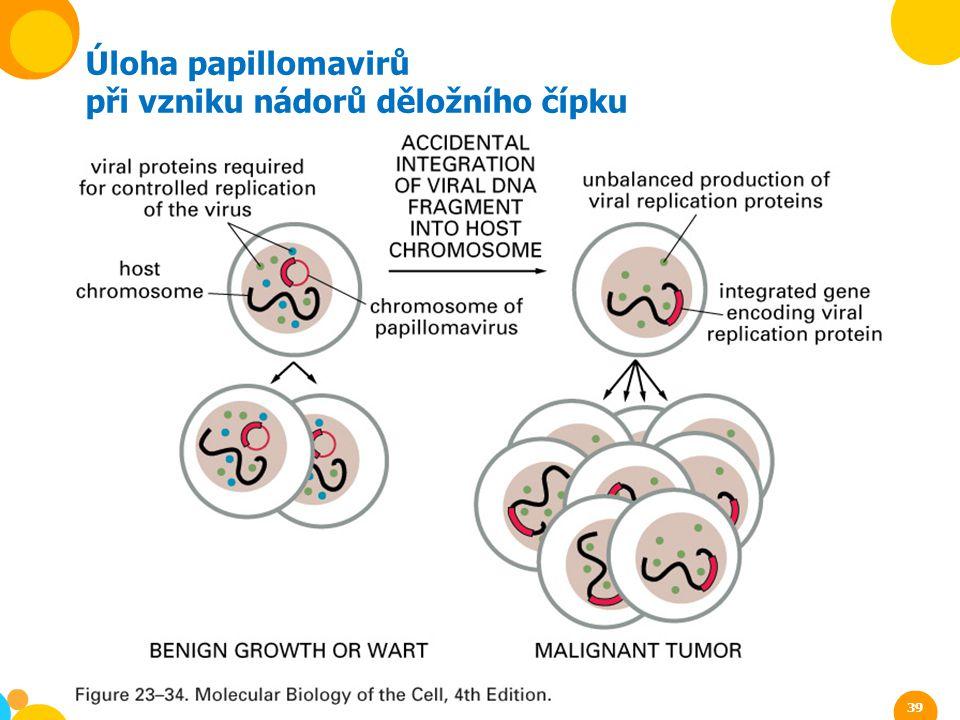 Úloha papillomavirů při vzniku nádorů děložního čípku 39