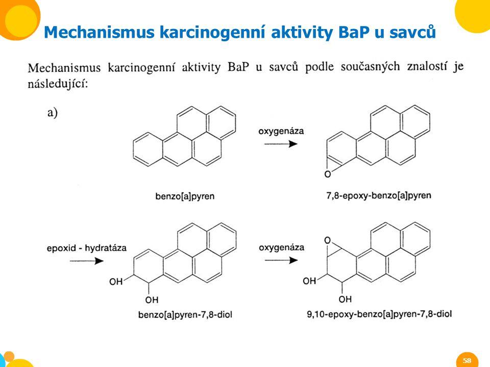 Mechanismus karcinogenní aktivity BaP u savců 58