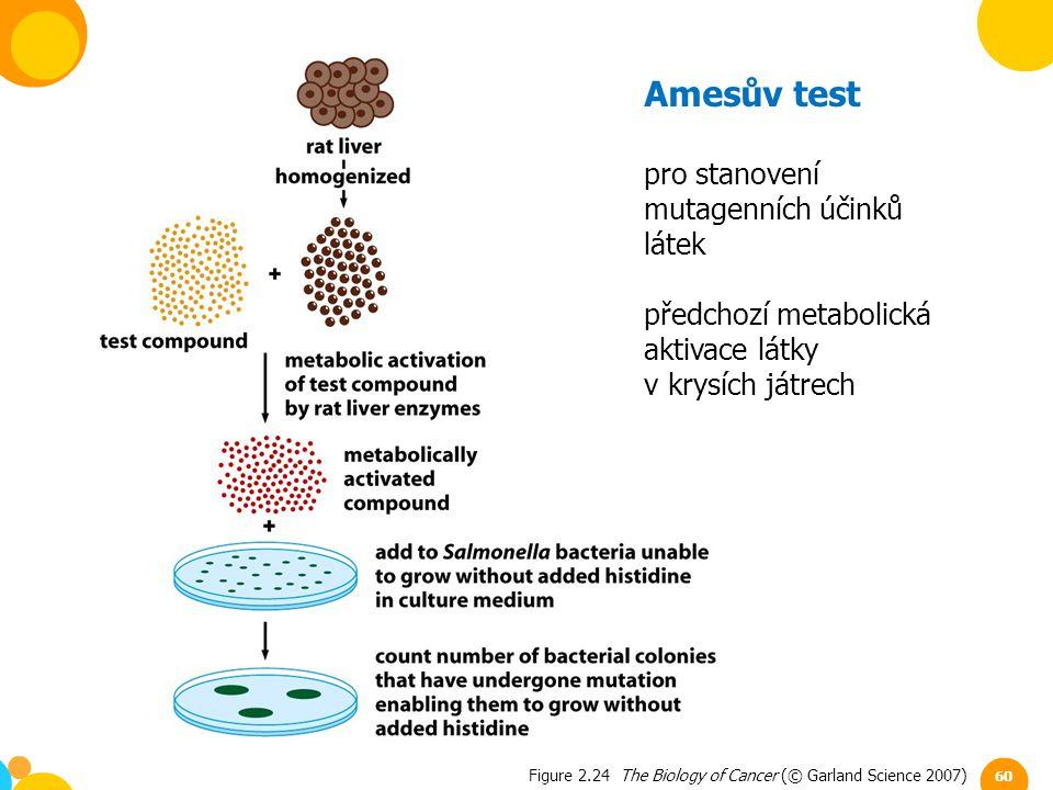 Figure 2.24 The Biology of Cancer (© Garland Science 2007) Amesův test pro stanovení mutagenních účinků látek předchozí metabolická aktivace látky v k