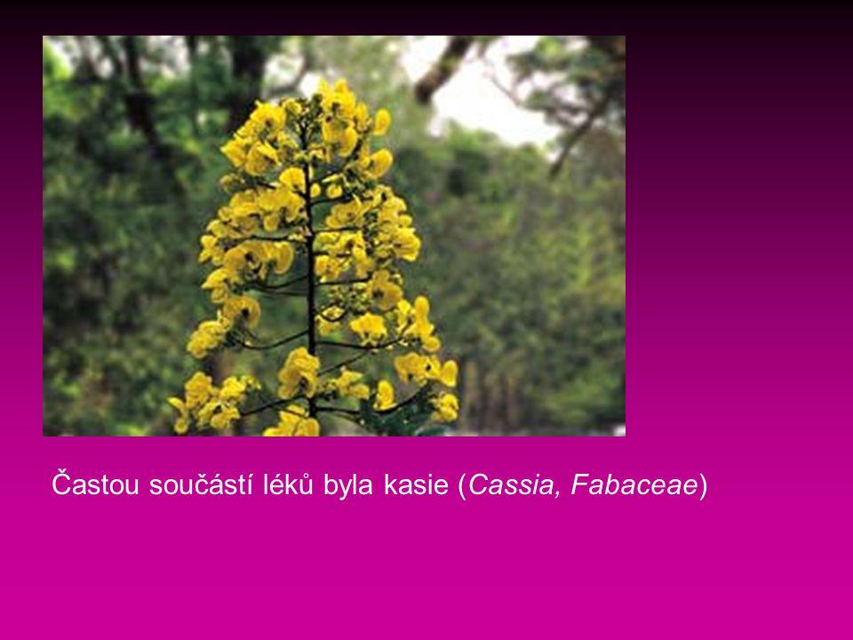 Častou součástí léků byla kasie (Cassia, Fabaceae)