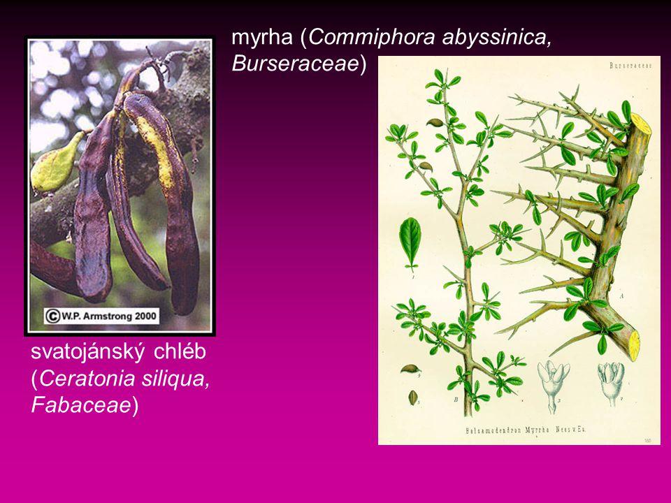 svatojánský chléb (Ceratonia siliqua, Fabaceae) myrha (Commiphora abyssinica, Burseraceae)