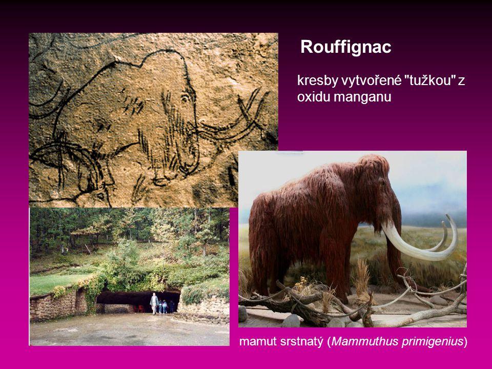 Rouffignac kresby vytvořené tužkou z oxidu manganu mamut srstnatý (Mammuthus primigenius)