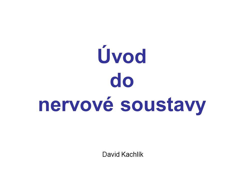 Úvod do nervové soustavy David Kachlík