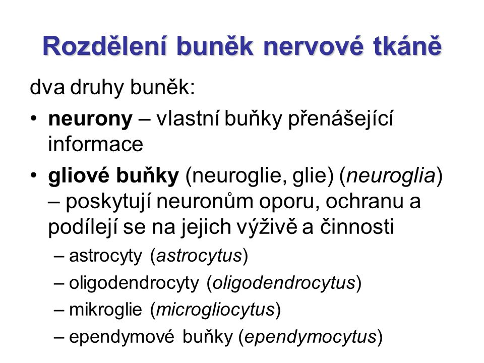 """Nervy jsou tvořeny snopci nervových vláken nervová vlákna mají obaly podobně jako svalová vlákna: –endoneurium vrstva retikulárních vláken kolem jednotlivých nervových vláken –perineurium """"rukáv obalující svazky nervových vláken tvořený vrstvami epiteloidních buněk četné zonulae occludentes – nepropustná bariéra chránící nervová vlákna –epineurium vazivový obal celého nervu"""
