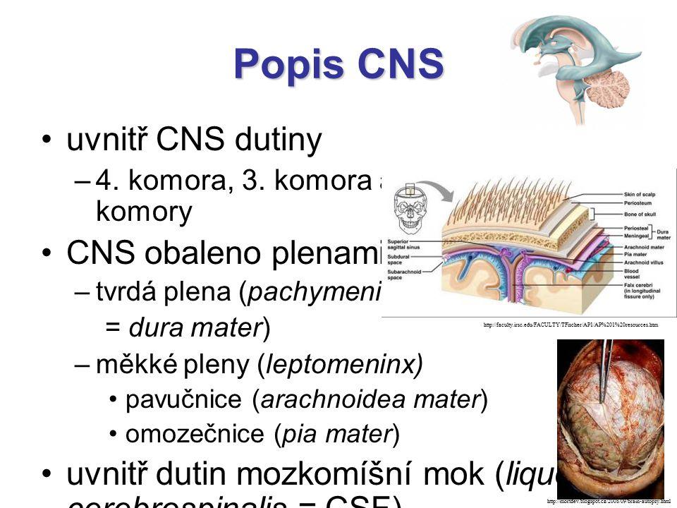 Popis CNS uvnitř CNS dutiny –4. komora, 3. komora a dvě postranní komory CNS obaleno plenami: –tvrdá plena (pachymeninx = dura mater) –měkké pleny (le