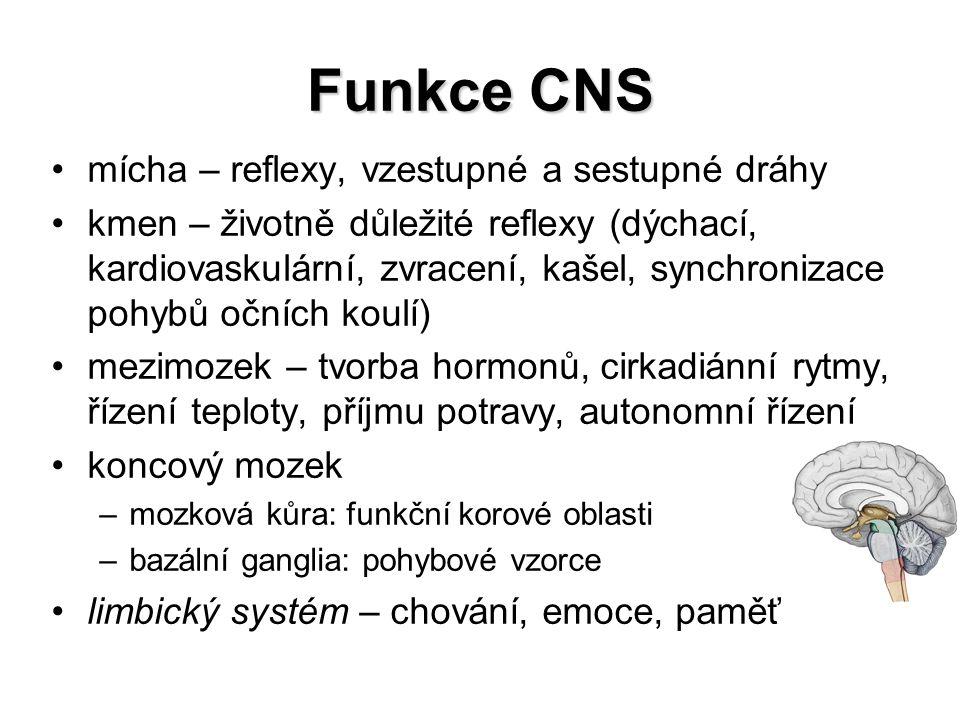 Funkce CNS mícha – reflexy, vzestupné a sestupné dráhy kmen – životně důležité reflexy (dýchací, kardiovaskulární, zvracení, kašel, synchronizace pohy