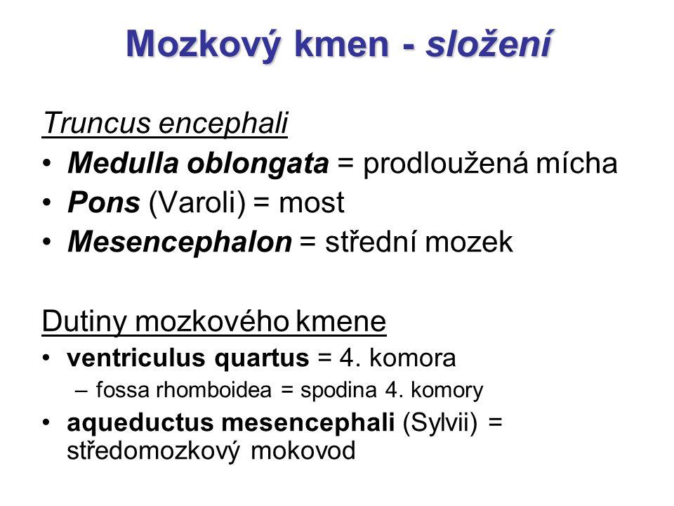 Truncus encephali Medulla oblongata = prodloužená mícha Pons (Varoli) = most Mesencephalon = střední mozek Dutiny mozkového kmene ventriculus quartus