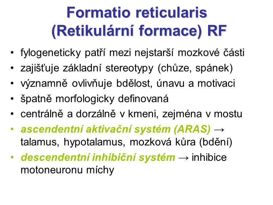 Formatio reticularis (Retikulární formace) RF fylogeneticky patří mezi nejstarší mozkové části zajišťuje základní stereotypy (chůze, spánek) významně