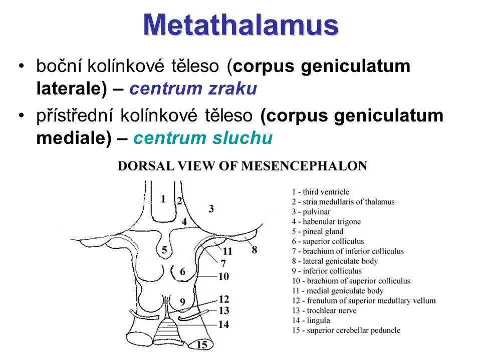 Metathalamus boční kolínkové těleso (corpus geniculatum laterale) – centrum zraku přístřední kolínkové těleso (corpus geniculatum mediale) – centrum s