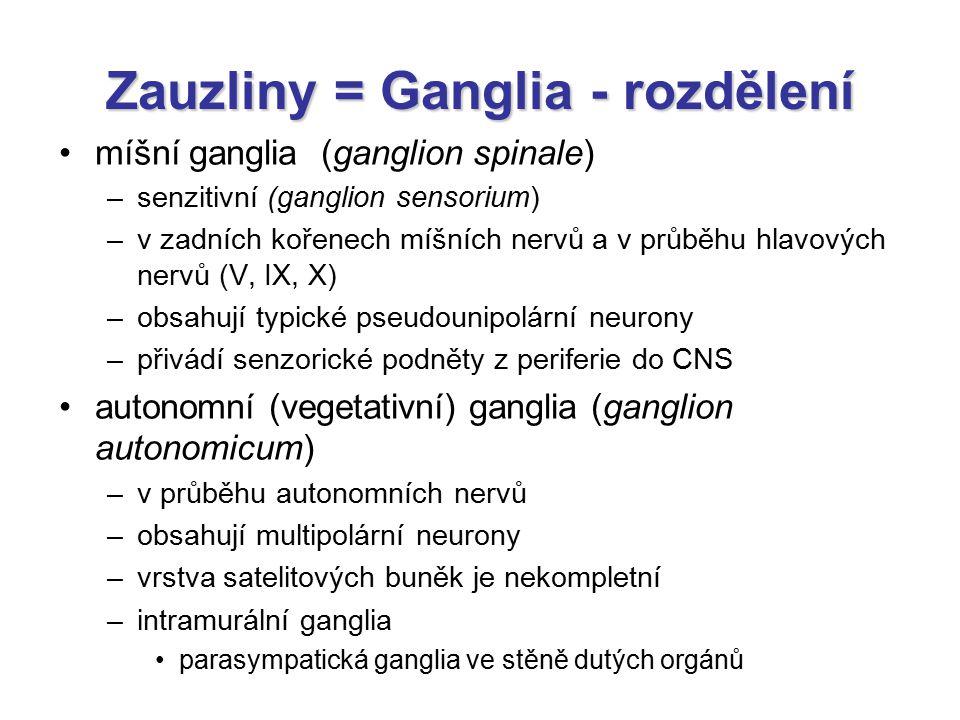 Zauzliny = Ganglia - rozdělení míšní ganglia (ganglion spinale) –senzitivní (ganglion sensorium) –v zadních kořenech míšních nervů a v průběhu hlavový
