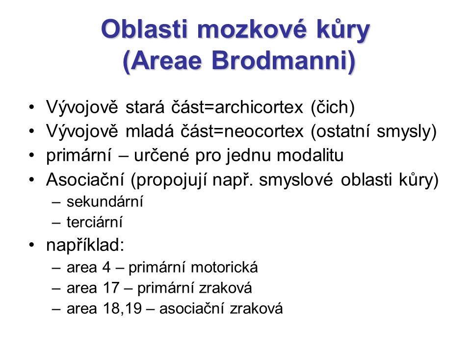 Oblasti mozkové kůry (Areae Brodmanni) Vývojově stará část=archicortex (čich) Vývojově mladá část=neocortex (ostatní smysly) primární – určené pro jed