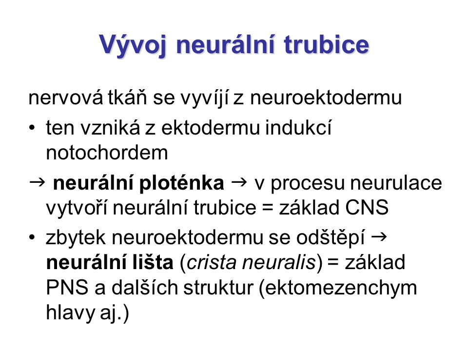 Vývoj neurální trubice nervová tkáň se vyvíjí z neuroektodermu ten vzniká z ektodermu indukcí notochordem  neurální ploténka  v procesu neurulace vy