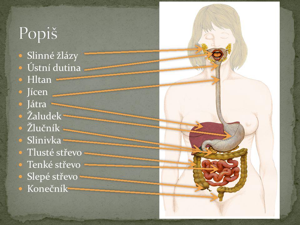 Tato žláza se odborně nazývá pankreas Ano, dá se žít i bez ní Lidé ale trpí cukrovkou a musí si píchat inzulín Tělo nedokáže dostatečně strávit potravu, takže člověk zůstane hladový, i když se dobře nají
