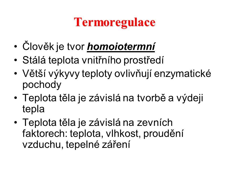 Termoregulace Člověk je tvor homoiotermní Stálá teplota vnitřního prostředí Větší výkyvy teploty ovlivňují enzymatické pochody Teplota těla je závislá