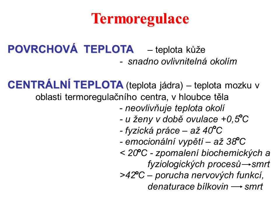 Termoregulace POVRCHOVÁ TEPLOTA POVRCHOVÁ TEPLOTA – teplota kůže - snadno ovlivnitelná okolím CENTRÁLNÍ TEPLOTA CENTRÁLNÍ TEPLOTA (teplota jádra) – te