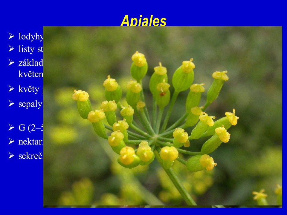  sekreční nádržky Apiales  listy střídavé, ve spirále, složené; řapíky často pochvaté  sepaly značně redukované; petaly volné  květy pětičetné, oboupohlavné  nektariový diskus vyvinut (stylopodium)  základní květenství ± okolíky – často sdružené do různých květenství vyšších řádů  lodyhy často v oblasti internodií duté  G (2–5)