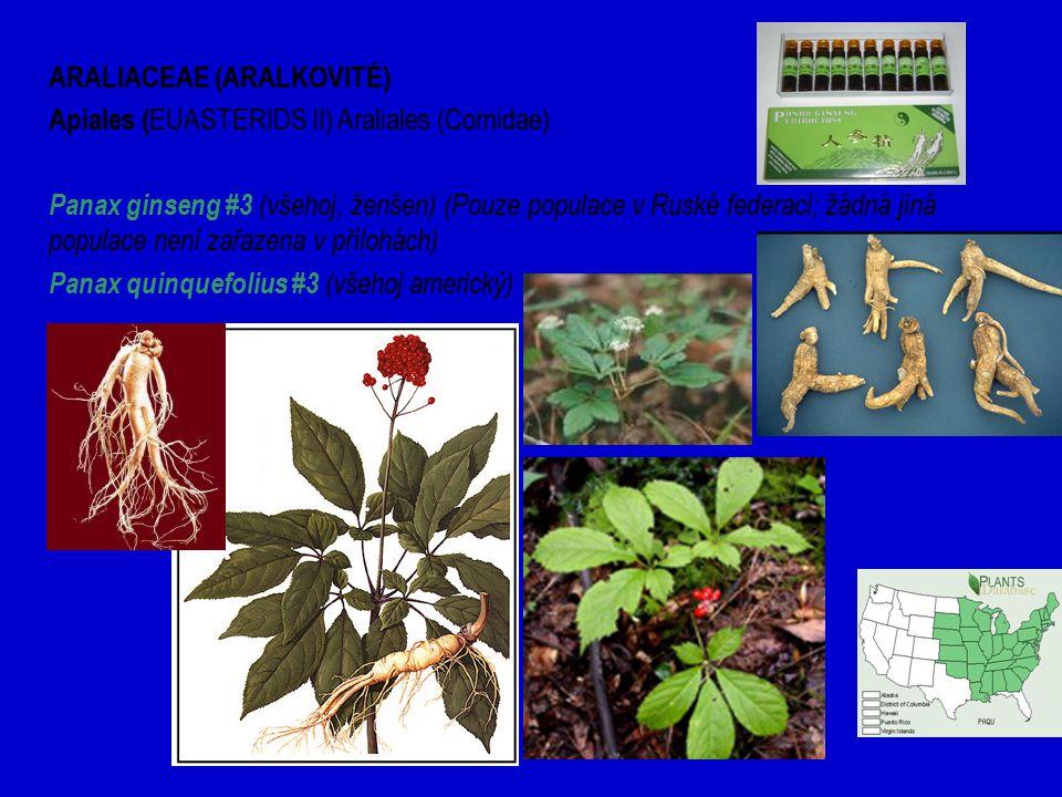 ARALIACEAE (ARALKOVITÉ) Apiales ( EUASTERIDS II) Araliales (Cornidae) Panax ginseng #3 (všehoj, ženšen) (Pouze populace v Ruské federaci; žádná jiná populace není zařazena v přílohách) Panax quinquefolius #3 (všehoj americký)