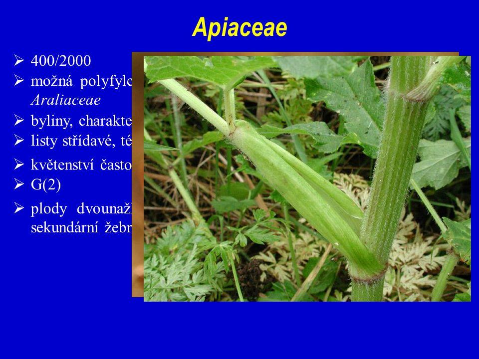 Apiaceae  400/2000  možná polyfyletická skupina z bazálních, zřejmě parafyletických Araliaceae  byliny, charakteristický habitus  listy střídavé, téměř vždy složené; pochva obvykle dobře vyvinutá  květenství často složený okolík – paprskující květy; obaly, obalíčky  G(2)  plody dvounažky, spojené karpoforem, v nažkách primární a sekundární žebra a siličné kanálky