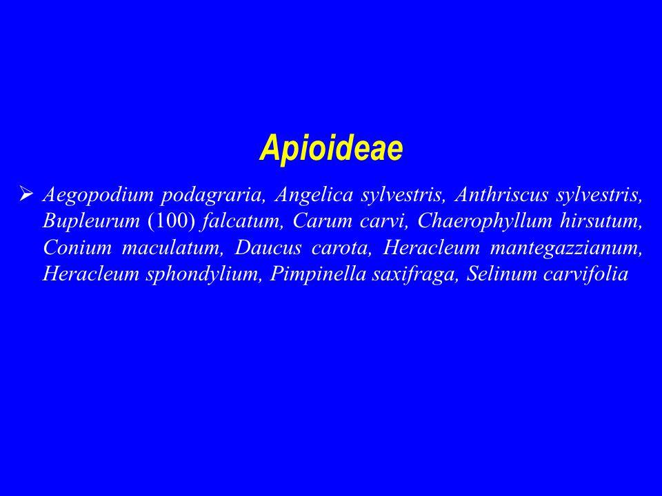 Apioideae  Aegopodium podagraria, Angelica sylvestris, Anthriscus sylvestris, Bupleurum (100) falcatum, Carum carvi, Chaerophyllum hirsutum, Conium maculatum, Daucus carota, Heracleum mantegazzianum, Heracleum sphondylium, Pimpinella saxifraga, Selinum carvifolia