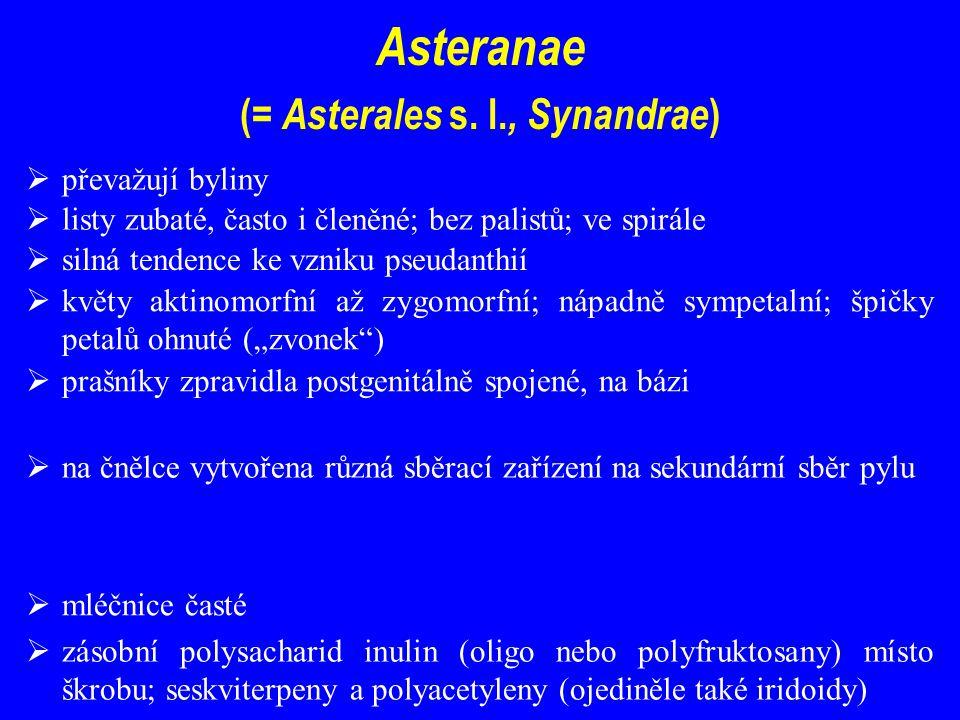 Asteranae ( = Asterales s.
