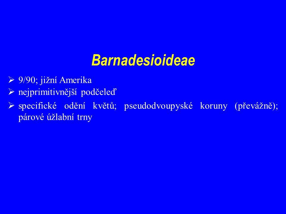 Barnadesioideae  9/90; jižní Amerika  nejprimitivnější podčeleď  specifické odění květů; pseudodvoupyské koruny (převážně); párové úžlabní trny